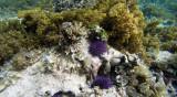 233 Mauritius island - Ile Maurice 2014 - G0871738_DxO Pbase.jpg