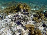 234 Mauritius island - Ile Maurice 2014 - GOPR1739_DxO Pbase.jpg