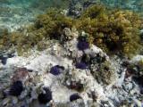 236 Mauritius island - Ile Maurice 2014 - GOPR1741_DxO Pbase.jpg