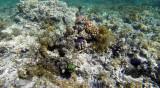 256 Mauritius island - Ile Maurice 2014 - G0901764_DxO Pbase.jpg