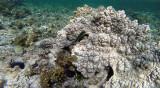 259 Mauritius island - Ile Maurice 2014 - G0901767_DxO Pbase.jpg