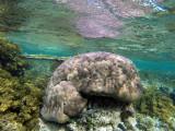 270 Mauritius island - Ile Maurice 2014 - GOPR1778_DxO Pbase.jpg