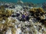 273 Mauritius island - Ile Maurice 2014 - GOPR1781_DxO Pbase.jpg