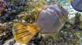 275 Mauritius island - Ile Maurice 2014 - G0921790_DxO Pbase.jpg
