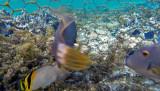 277 Mauritius island - Ile Maurice 2014 - G0931802_DxO Pbase.jpg