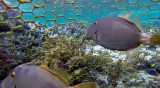 278 Mauritius island - Ile Maurice 2014 - G0931804_DxO Pbase.jpg