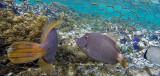280 Mauritius island - Ile Maurice 2014 - G0931807_DxO Pbase.jpg