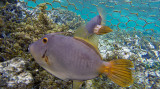281 Mauritius island - Ile Maurice 2014 - G0931808_DxO Pbase.jpg