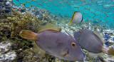 282 Mauritius island - Ile Maurice 2014 - G0931809_DxO Pbase.jpg