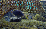 285 Mauritius island - Ile Maurice 2014 - G0941817_DxO Pbase_modifi'-1.jpg