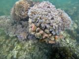 304 Mauritius island - Ile Maurice 2014 - GOPR1843_DxO Pbase.jpg