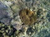 316 Mauritius island - Ile Maurice 2014 - GOPR1855_DxO Pbase.jpg