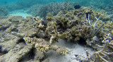 332 Mauritius island - Ile Maurice 2014 - G1021893_DxO Pbase.jpg