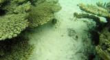 339 Mauritius island - Ile Maurice 2014 - G1051912_DxO Pbase.jpg