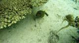 341 Mauritius island - Ile Maurice 2014 - G1051914_DxO Pbase.jpg