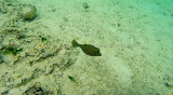 342 Mauritius island - Ile Maurice 2014 - G1061922_DxO Pbase.jpg