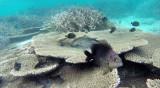 344 Mauritius island - Ile Maurice 2014 - G1071929_DxO Pbase.jpg