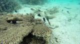 353 Mauritius island - Ile Maurice 2014 - G1151957_DxO Pbase.jpg