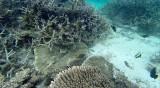354 Mauritius island - Ile Maurice 2014 - G1151958_DxO Pbase.jpg