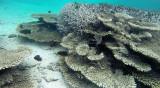 358 Mauritius island - Ile Maurice 2014 - G1171970_DxO Pbase.jpg