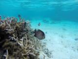 366 Mauritius island - Ile Maurice 2014 - GOPR1979_DxO Pbase.jpg