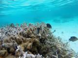 367 Mauritius island - Ile Maurice 2014 - GOPR1980_DxO Pbase.jpg