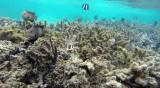 372 Mauritius island - Ile Maurice 2014 - G1181986_DxO Pbase.jpg