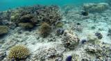 377 Mauritius island - Ile Maurice 2014 - G1222005_DxO Pbase.jpg