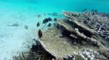 385 Mauritius island - Ile Maurice 2014 - G1252023_DxO Pbase.jpg