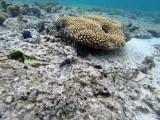 417 Mauritius island - Ile Maurice 2014 - GOPR2059_DxO Pbase.jpg