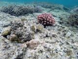 420 Mauritius island - Ile Maurice 2014 - GOPR2062_DxO Pbase.jpg