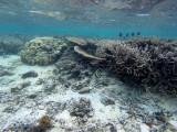 429 Mauritius island - Ile Maurice 2014 - GOPR2071_DxO Pbase.jpg