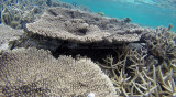 430 Mauritius island - Ile Maurice 2014 - G1272073_DxO Pbase.jpg