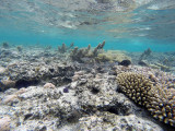 449 Mauritius island - Ile Maurice 2014 - GOPR2092_DxO Pbase.jpg