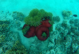 511 Mauritius island - Ile Maurice 2014 - GOPR2182_DxO Pbase.jpg