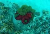 512 Mauritius island - Ile Maurice 2014 - GOPR2183_DxO Pbase.jpg