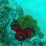 513 Mauritius island - Ile Maurice 2014 - GOPR2184_DxO Pbase.jpg