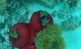 515 Mauritius island - Ile Maurice 2014 - GOPR2186_DxO Pbase.jpg