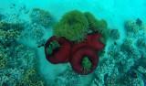 517 Mauritius island - Ile Maurice 2014 - GOPR2188_DxO Pbase.jpg