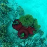 518 Mauritius island - Ile Maurice 2014 - GOPR2189_DxO Pbase.jpg