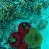 519 Mauritius island - Ile Maurice 2014 - GOPR2190_DxO Pbase.jpg