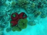 520 Mauritius island - Ile Maurice 2014 - GOPR2191_DxO Pbase.jpg