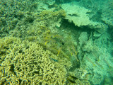 537 Mauritius island - Ile Maurice 2014 - GOPR2218_DxO Pbase.jpg