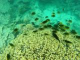 555 Mauritius island - Ile Maurice 2014 - GOPR2248_DxO Pbase.jpg