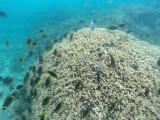 560 Mauritius island - Ile Maurice 2014 - GOPR2255_DxO Pbase.jpg