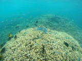 561 Mauritius island - Ile Maurice 2014 - GOPR2256_DxO Pbase.jpg