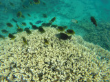 567 Mauritius island - Ile Maurice 2014 - GOPR2262_DxO Pbase.jpg