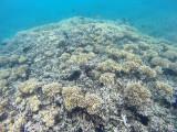573 Mauritius island - Ile Maurice 2014 - GOPR2271_DxO Pbase.jpg