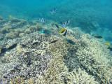581 Mauritius island - Ile Maurice 2014 - GOPR2281_DxO Pbase.jpg