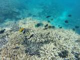 584 Mauritius island - Ile Maurice 2014 - GOPR2284_DxO Pbase.jpg